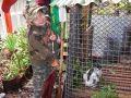 餵兔子。這個園區用兔子的大便當做其他植物的自然肥料。2008-11-09